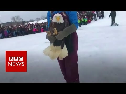 Eagle rescued after huge ice ball grows on its tail - BBC News