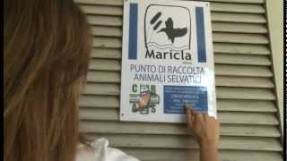 Maricla