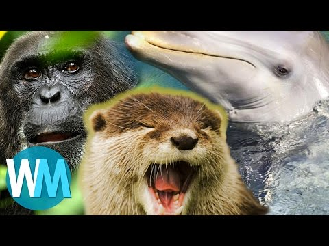 Top 10 Things BBCs Planet Earth Taught Us