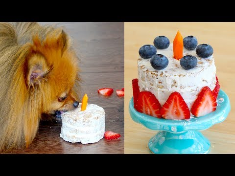 How To Make A Birthday Cake FOR DOGS | PADDINGTON'S PANTRY | RECIPE