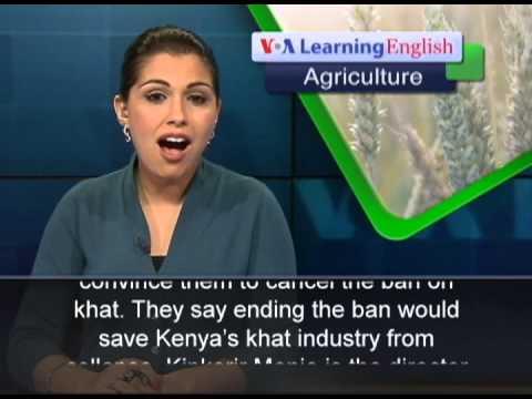 British Ban on Khat Angers Kenyan Farmers