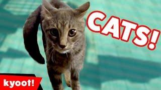 animale faze noi cu pisici