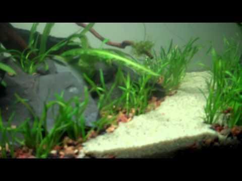 Cichlid Fish Tank Cichlid Fsh Tank Open Bottom