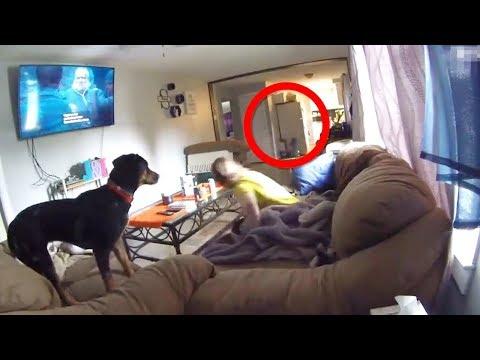 The Secret World of Puppy Play - Thời lượng: 4 phút và 42 giây.