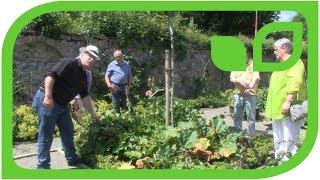 Die Geschichte der fremden Rhabarberpflanze