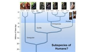 CARTA: The Origin Of Us -- Michael Hammer: Interbreeding With Archaic Humans In Africa