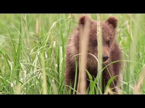 Bears Featurette 'Protecting Wildlife & Wild Places'