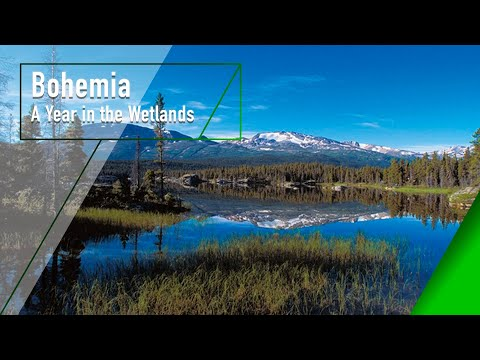 Bohemia - A Year in the Wetlands - The Secrets of Nature