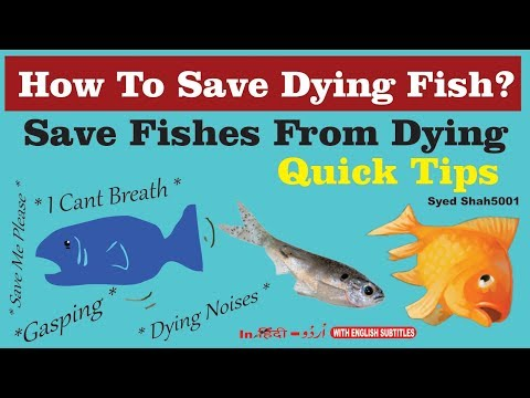 How to save Dying fish quick Tips complete info & guide how to save injured sick fish