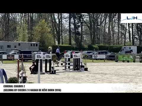 CORDIAL 5YO TRAINING SHOW BORNIVAL APRIL 2021