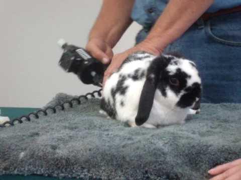 rabbit orthopedic