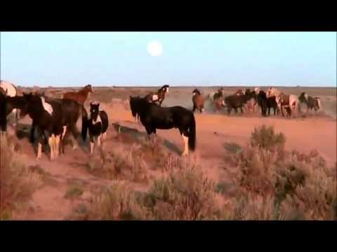 Stallions fighting to keep their mares~ Full April Moon-2013