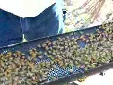 Finding the Queen Bee – Part II