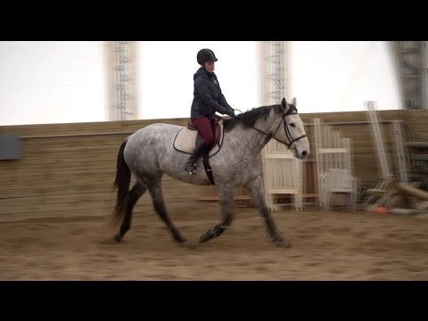 Riding in The Cold Winter in My New Elation Chelsea Breeches!
