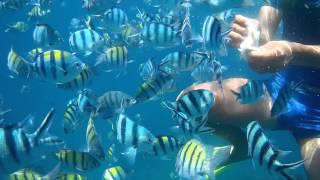 Кормёжка рыб бали