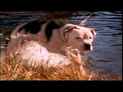 Homeward Bound: The Incredible Journey (1993) - Theatrical Trailer