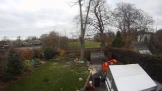 Down To Earth Tree Ash Removal