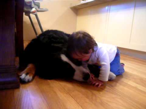 Watch 'Dog kissing baby'