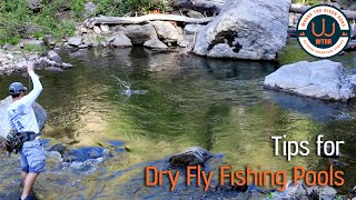 Dry Fly Fishing Freestones | Pools