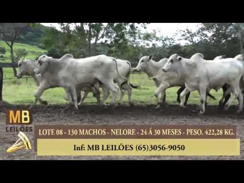 192º LEILÃO VIRTUAL MB LEILÕES
