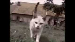 Funny Animal Clips!!!