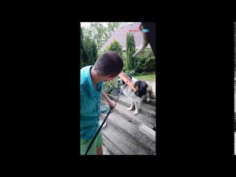 Česání psa