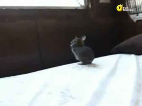 coniglietto mignon vs finestra