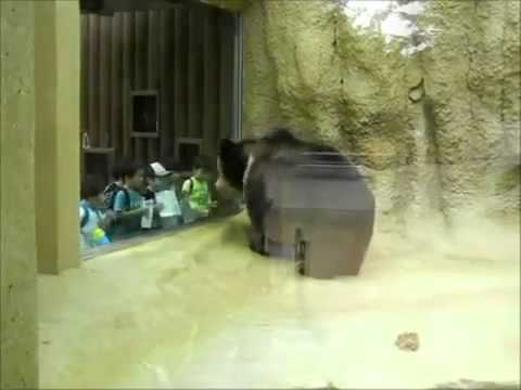 So Cute!, a bear in zoo bounces to the music with the kids!