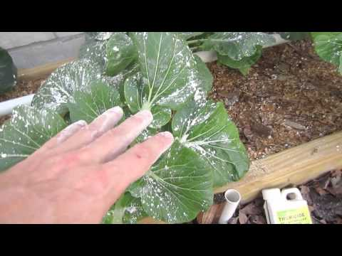 Organic Pest Control for Vegetable Gardens