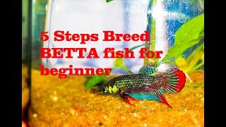 Hye guys,,, how are u today??.title :breeding Betta fish SIMPLE GUIDEsubscribe my channel : https://www.youtube.com/channel/UCKeWSwwwkQg_roYj5wOBZ8QBreeding Siamese Fighting Fish, or bettas, is a wonderful hobby. However, it's not something to be taken lightly. If you have the abundant time, resources, knowledge, and commitment that breeding bettas demands, it can also be a rewarding experience.1. Setup and Choosing Bettas to BreedLearn as much as possible.Set up your permanent tanksObtain a breeding pair2. Building the Conditions for BreedingLet them settle inSet up your breeding tankStart feeding live food when you are ready to breed themBegin raising fry foodIntroduce the pairObserve their behavior.3. Breeding Your BettasRemove the dividerLet nature take its course.Remove the female bettaLeave the male in the tank until the fry can swim around4. Caring for the FryWait for fry to hatchRemove the male from the tank, being very careful not to net any fryFeed the fryGive the fry time to growPlace the fry into grow-out tanks5. Nursing the Fry to AdulthoodWean the fry off live foodSeparate malesDecide the future of your spawnSexing Young Bettas