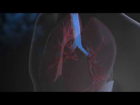 What is the Respiratory System?