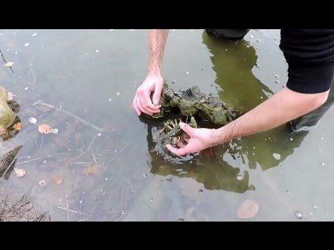 как ловить раков в мутной воде