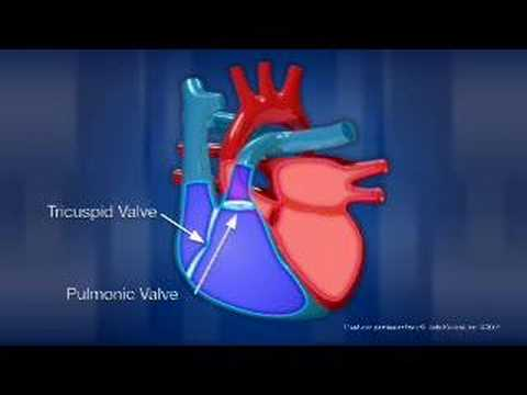 Heart - A Doctor walks you through an animated video about the amazing human heart.