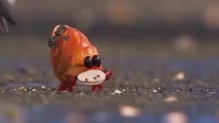Nonton Piper - Cute Bird From Pixar Film Subtitle Indonesia Streaming Movie Download