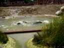 Zoo Denmark - Elephants cooling off in the pool of their new enclosure at Copenhagen zoo, Denmark. They were moved from the smaller enclosure in March 2008 and their new h...