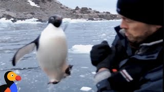 Penguin Jumps Into Boat | The Dodo by The Dodo