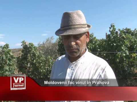 Moldovenii fac vinul în Prahova