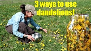 Download Lagu 3 WAYS TO USE SPRING DANDELIONS ~ FORAGING Mp3