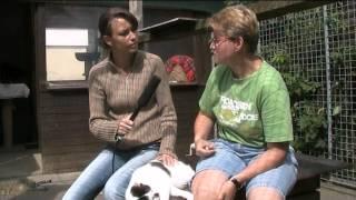 Tierheim Mölln - Miau Der Woche 32/12 Kater 8.8.2012