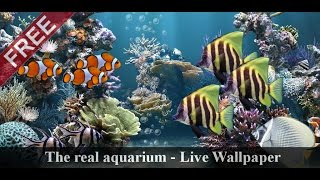 The real aquarium - LWP YouTube video