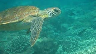 Bribie Island Australia  City pictures : Snorkeling - Bribie island & Moreton island, Queensland, Australia