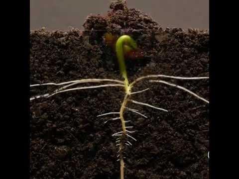 Como la semilla...crece ntra conexión con ntro SER ESENCIAL (видео)