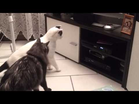 gatti tecnologici