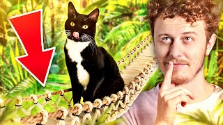 Video The Best Gifts For Cats - Norman MP3, 3GP, MP4, WEBM, AVI, FLV Agustus 2018