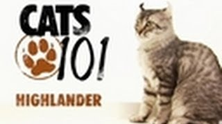 Highlander | Cats 101