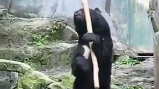 Japanese Kung Fu Bear