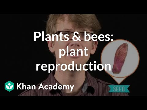 Equational asexual reproduction video