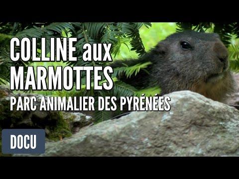 Parc Animalier des Pyrénées - Colline aux Marmottes