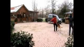 Profesyonel Köpek Eğitimi 6 videosunun kapak resmi