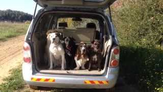 How To Get 5 Dogs Out Of The The Car Properly :))